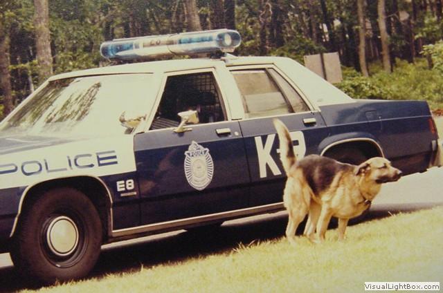 K9 Photos   Barnstable Police Department